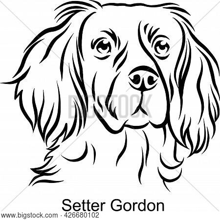 Setter Gordon Portrait Dog In Line Style - Pet Portrait In Light Style Head Isolated On White