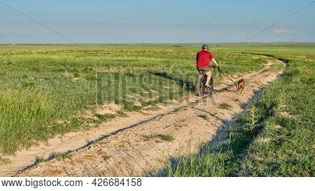 Senior man is riding a fat mountain bike with his pitbull dog on leash on a dirt road in a green prairie - Pawnee National Grassland in northern Colorado