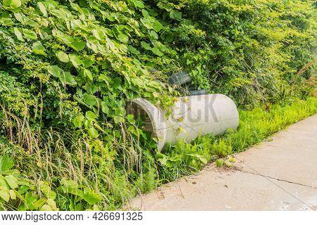 Section Of Round Concrete Culvert In Tall Grass Next To Concrete Sidewalk.