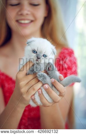 Girl With A Kitten. A Small Kitten In The Hands Of A Child. High Quality Photo