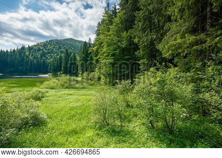 Landscape With Lake Of Synevyr National Park. Beautiful Summer Scenery Of Carpathian Mountains. Popu
