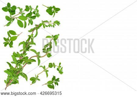 Oregano Or Marjoram Leaves Fresh And Dry Isolated On White Background. Top View With Copy Space For