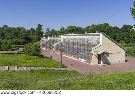 Moscow, Russia - June 20, 2021: Grape Greenhouse In Tsaritsynsky Park, Moscow. Sunny Day In June.