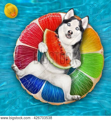 A Dog Husky With A Slice Of Watermelon Is Lying On An Inflatable Fruit In A Swimming Pool At The Res