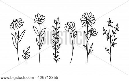 Wildflowers Black And White Clipart Bundle, Daisy And Chamomile Flower, Botanical Floral Isolated El