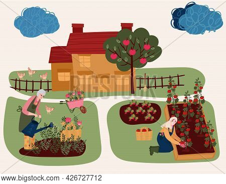 Senior Woman Watering Flowers. Woman Cultivating Garden. Aged Female Hobby Gardening In Yard. Bed Wi