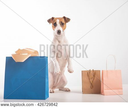 Dog Shopping Sale. Jack Russell Terrier And Different Paper Bags On A White Background