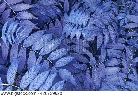 Blue Purple Leaves Are A Fantastic Background