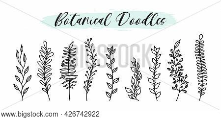 Hand Drawn Doodle Vector Botanical And Floral Elements Set Line Style. Natural Sketch Plant Branches