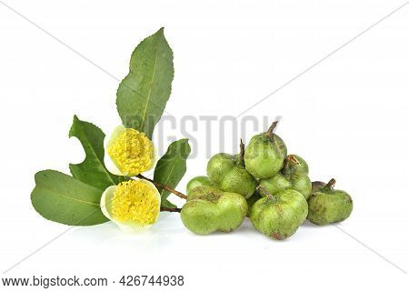 Green Tea Seeds And Tea Flower Isolated On White Background