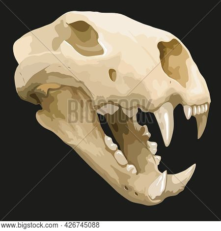 Skull Of Ancient Animal, Prehistoric Fossil, Saber Toothed Tiger, Photo-real Vector Illustration