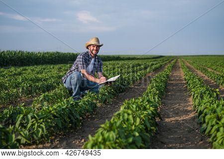 Happy Farmer Is Examining His Chili Plantation.