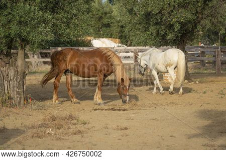 Two Horses In A Corral At The Ranch