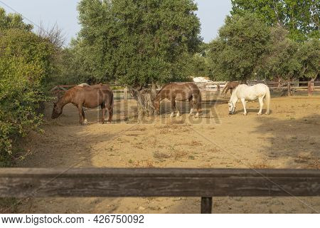 Herd Of Horses In A Corral At The Ranch