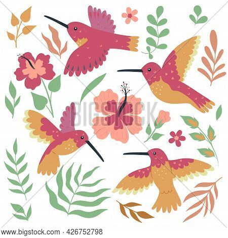 Set Of Hummingbird Birds And Flowers Isolated On White Background. Vector Image.