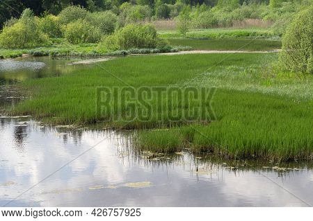Overgrown Lake Or Pond. Beautiful Landscape With Lake On A Summer Day.