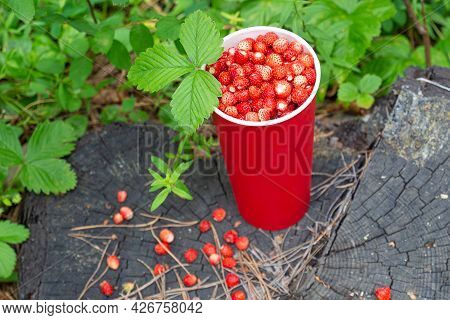 Freshly Picked Sweet Red Wild Strawberry Berries With Green Leaf In A Red Paper Glass On Wood Stump