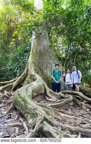 Tourists Posing With Big Trunk Tualang Tree With Huge Roots At Taman Negara National Park, Pahang