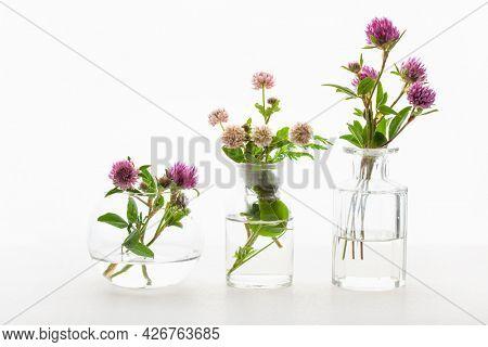 summer wild medical flowers and herbs in glass jars. alternative medicine