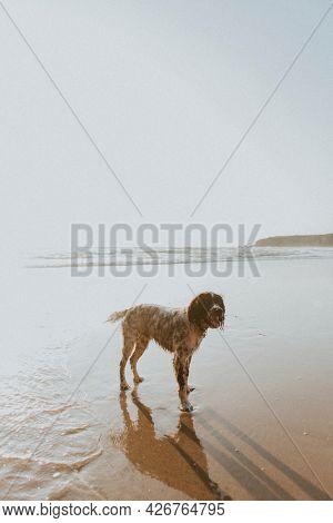 Wet dog enjoying the beach