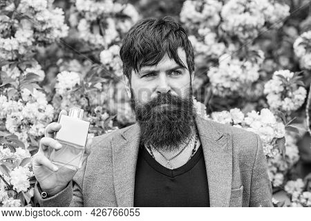 That Is How Spring Smells. Fashionable Hipster In Cherry Bloom. Sakura Blossom. Handsome Bearded Man