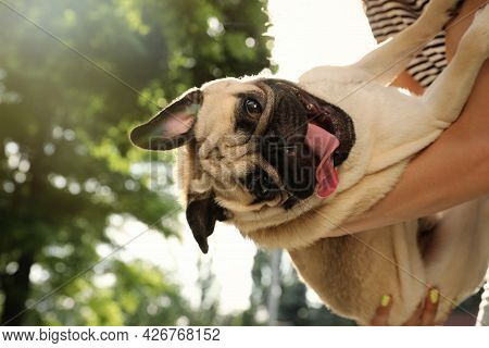 Woman With Cute Pug Dog Outdoors On Sunny Day, Closeup. Animal Adoption