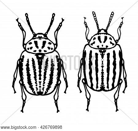 Vector Set Of Isolated Elements Of Colorado Beetles On A White Background For A Packaging Design Tem