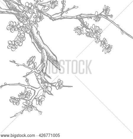 Sakura Branch. Flower Graphic Vector Illustration. Hand Drawn Branch Of Sakura With Blooms.