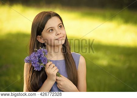 Girl Blue Dress Relax Green Field With Fresh Cornflowers, Dreamy Child Concept