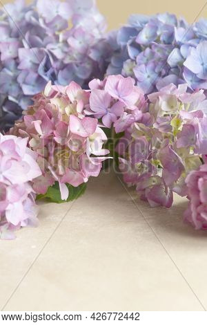 Hydrangea Flowers. Abstract Pink And Blue Floral Background, Selective Focus. Copy Space Mock Up.