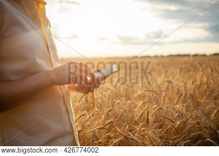 Man Agronomist Uses Modern Technology In A Wheat Field. Ripe Barley, Sunset. The Specialist Calculat