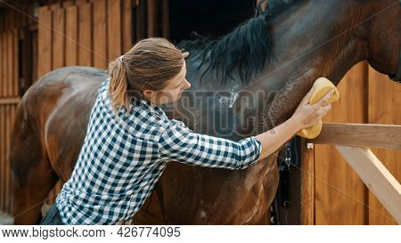 Horse Owner Giving A Bath To Her Seal Brown Stallion In The Stable. With A Sponge Rubbing The Neck O