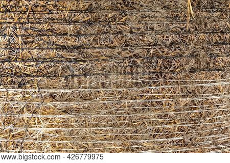 Hay And Mesh Close-up. Hay Texture. Background. Dry Grass. Animal Nutrition Concept. Photo.