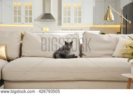 Modern Living Room Interior. Adorable Grey British Shorthair Cat On Couch