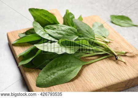 Broadleaf Plantain Leaves On Light Grey Table, Closeup
