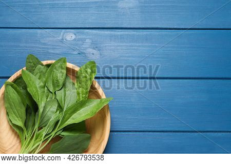 Broadleaf Plantain Leaves On Blue Wooden Table, Top View. Space For Text