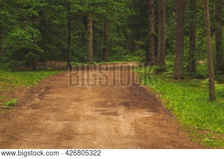 Beautiful Empty Path Through A Forest In Forest. Rural Landscape In Summer, Europe Banner Of Beautif