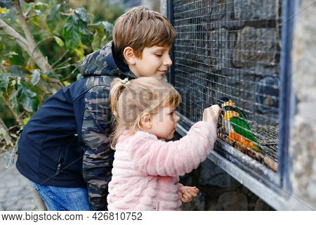 Two Happy Children, Siblings Feeding Parrots In Zoological Garden. Toddler Girl And Kid Boy Playing