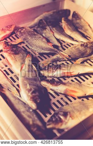 The Process Of Preparing Dried Fish With An Automatic Dryer At Home.