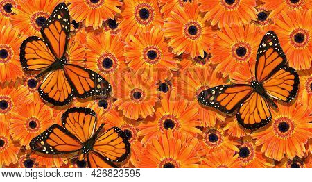 Natural Orange Background. Bright Monarch Butterfly On A Background Of Orange Gerbera Flowers