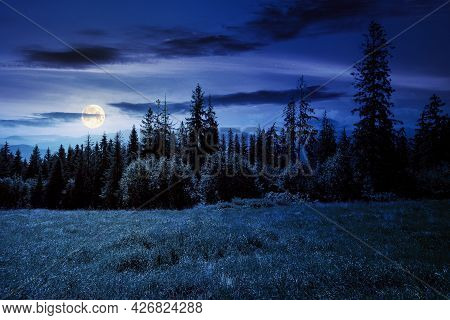 Spruce Forest On The Grassy Hillside At Night. Beautiful Nature Scenery In Mountains. Summer Landsca