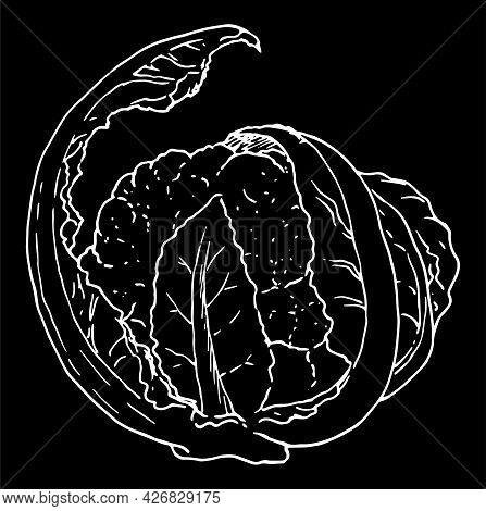Vector Drawing Of Cauliflower In The Sketch Style With A White Line On A Black Background. Cauliflow