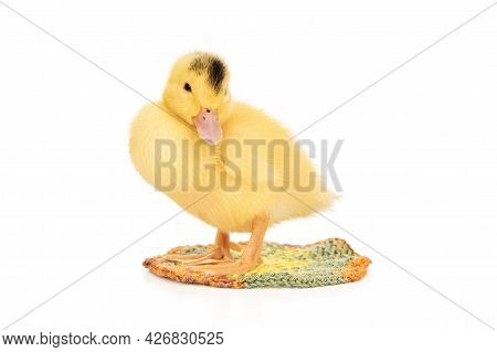 Portrait Of A Little Yellow Duckling With A Black Spot On His Head On A Knitted Rug Isolated On Whit