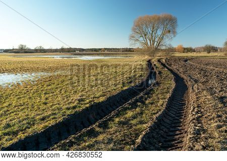 Muddy Road In The Meadow Towards The Tree