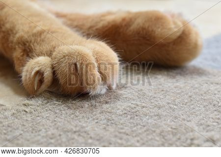 Ginger Cat Paws And Claws On The Rug Or Carpet.  Copy Space Is On The Right Side. Photo Can Use For