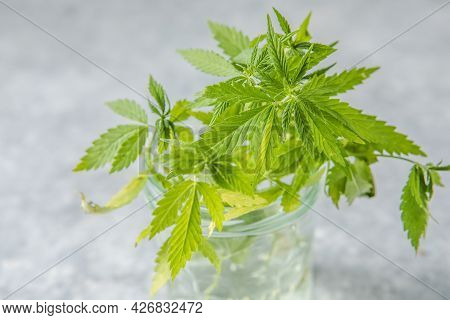 Medicinal Hemp Leaves In A Glass Dropper Bottle With Cbd Hemp. Medical Cannabis Concept.medicinal He