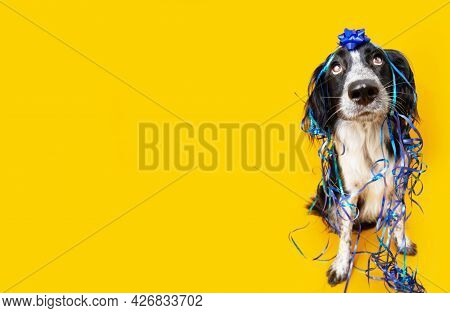 Banner Birthday Card Puppy Dog Looking Up, Covered With A Blue Ribbon And Garlands And Sitting On Ye