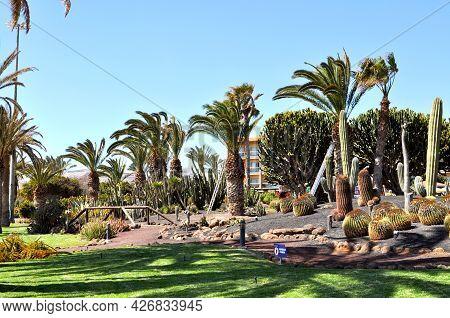 Garden With Huge Cactuses And Palm Trees In The Tourist Village Of Castillo Caleta De Fuste, Fuertev