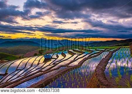 The Beautiful Scenery Of The Terraced Rice Fields At Ban Pa Pong Piang In Chiang Mai, Thailand.