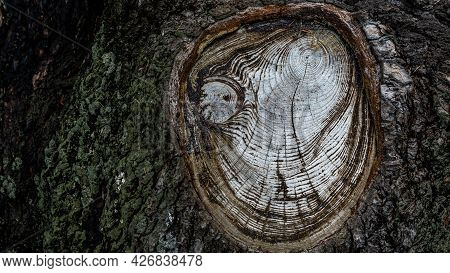 Abstract Texture Of Tree Stump. Crack Wood Texture. Beauty In Nature.